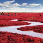 Fancy A Trip To The Stunning Red Beach Of Panjin?
